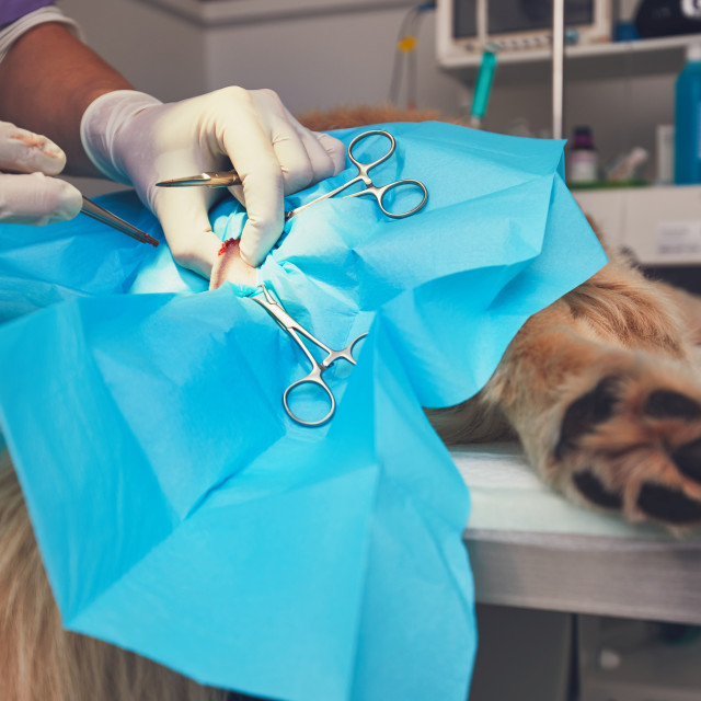 """""""Dog in the animal hospital"""" stock image"""