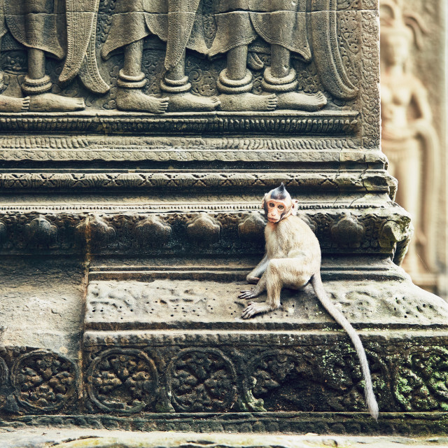 """""""Monkey on the temple wall"""" stock image"""