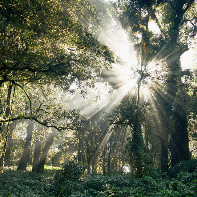 """Mysterious morning in tropical rainforest"" stock image"