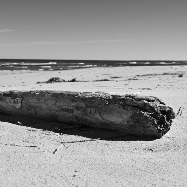 """""""Driftwood, Prince Edward Island, Black and White"""" stock image"""