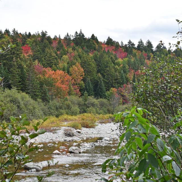 """Fundy National Park, New Brunswick"" stock image"