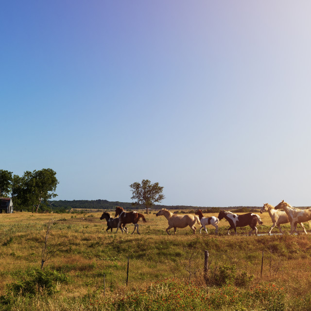 """Horses in a ranch with an old barn in the background in rural Texas at sunset, USA; Concept for travel in the USA and in Texas"" stock image"