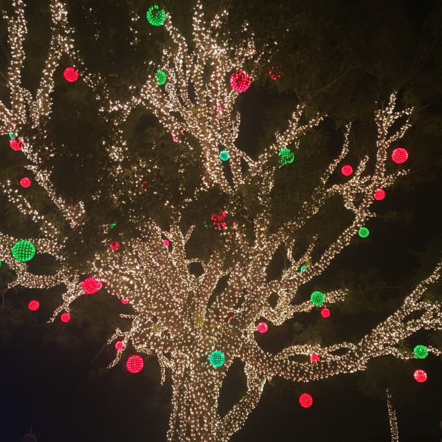 """Tree wrapped with Christmas lights"" stock image"