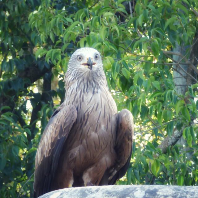 """""""Eagle Portrait"""" stock image"""