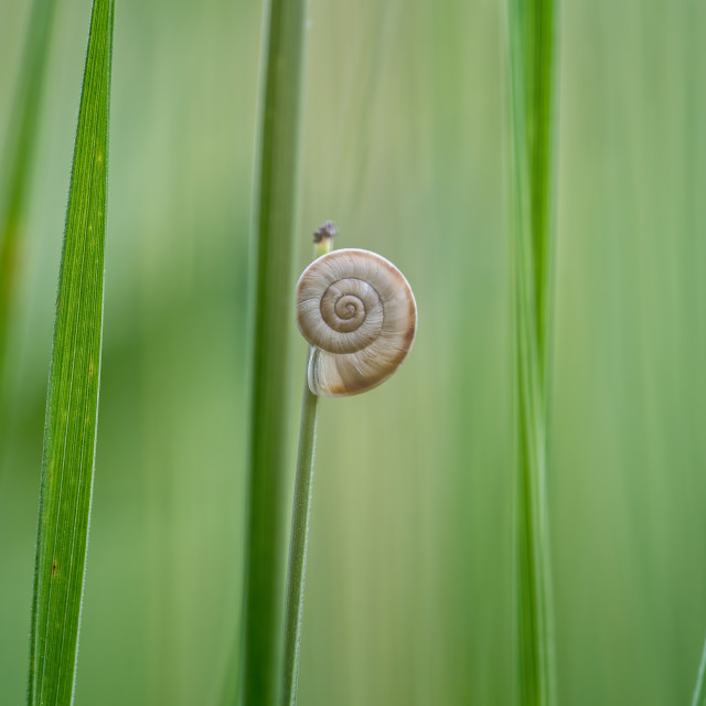 """""""Small snail on the plant"""" stock image"""