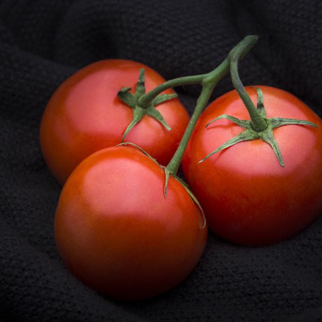 """Tomato"" stock image"