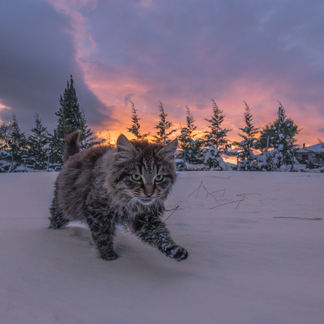 """Cat in winter"" stock image"