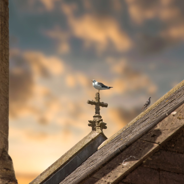 """Birds perched on church roof at sunset."" stock image"