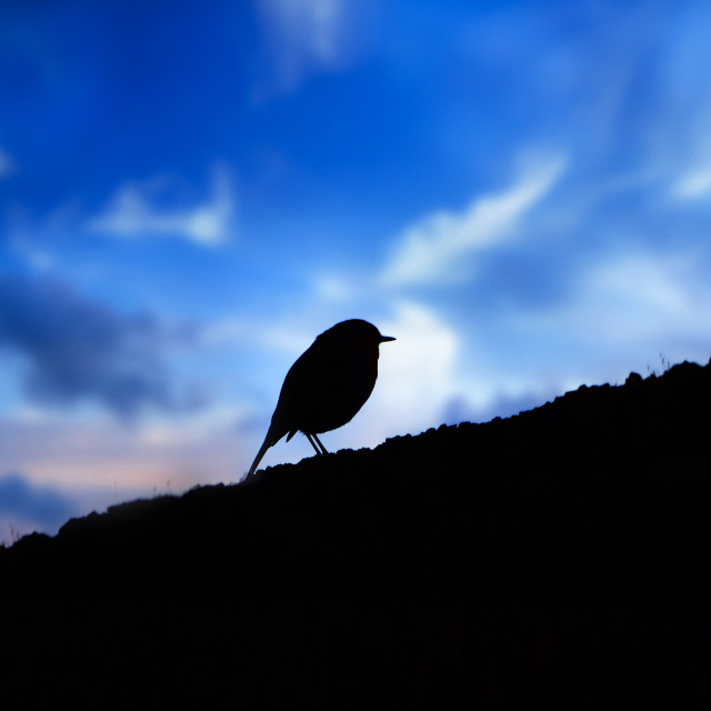 """Christmas robin on wall with dawn sky background."" stock image"