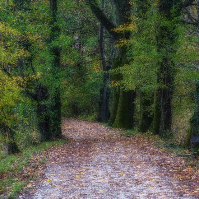 """Sentiero nel bosco"" stock image"