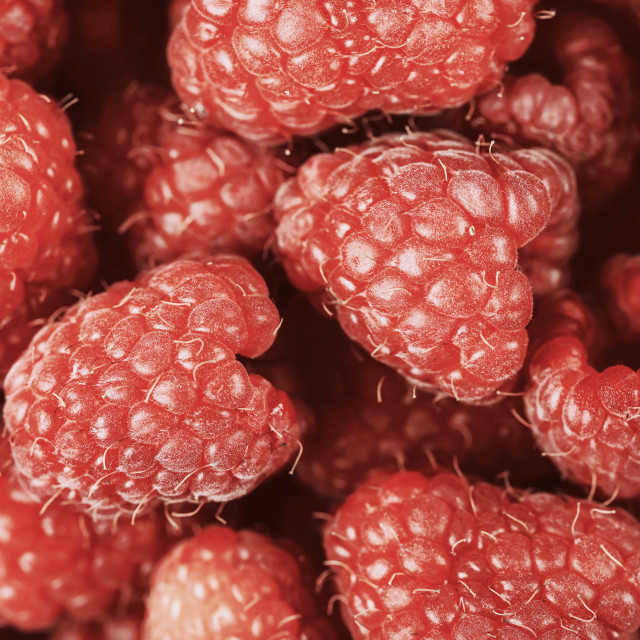 """Red Raspberry Fruits"" stock image"