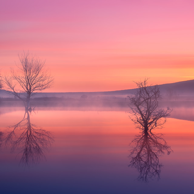 """Purple dawn"" stock image"