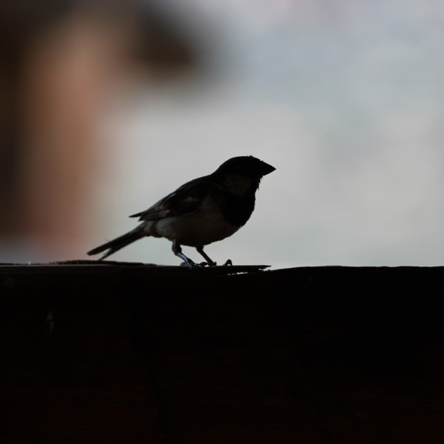 """Silhouetted Bird"" stock image"