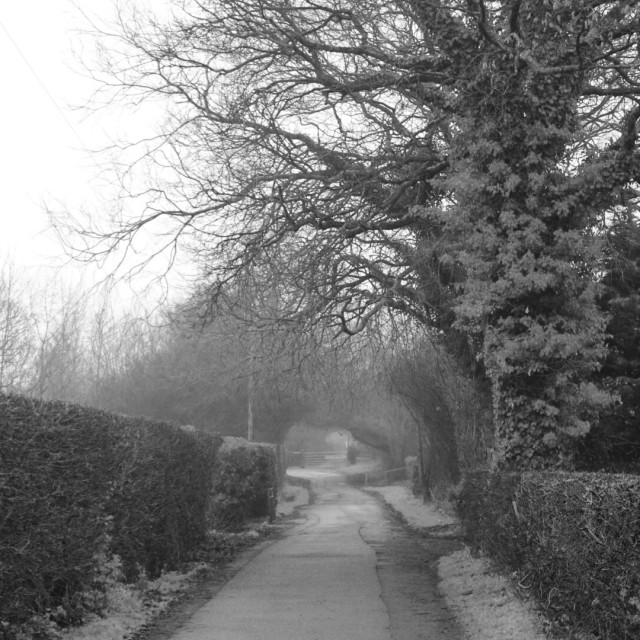 """Frost and mist on a country lane in Preston, Lancashire"" stock image"