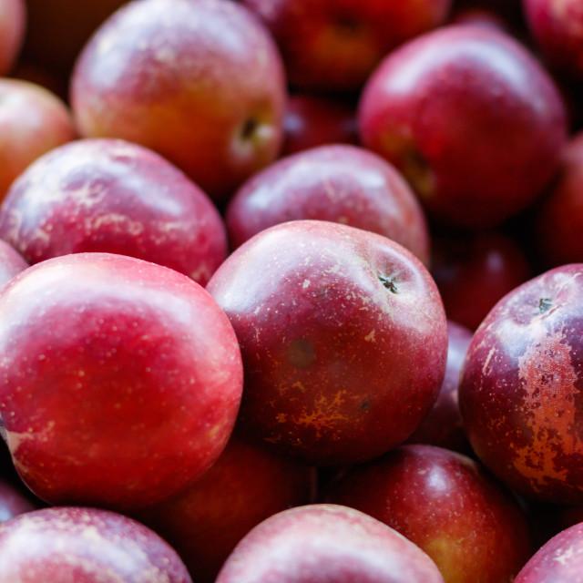 """Black Twig Apples"" stock image"