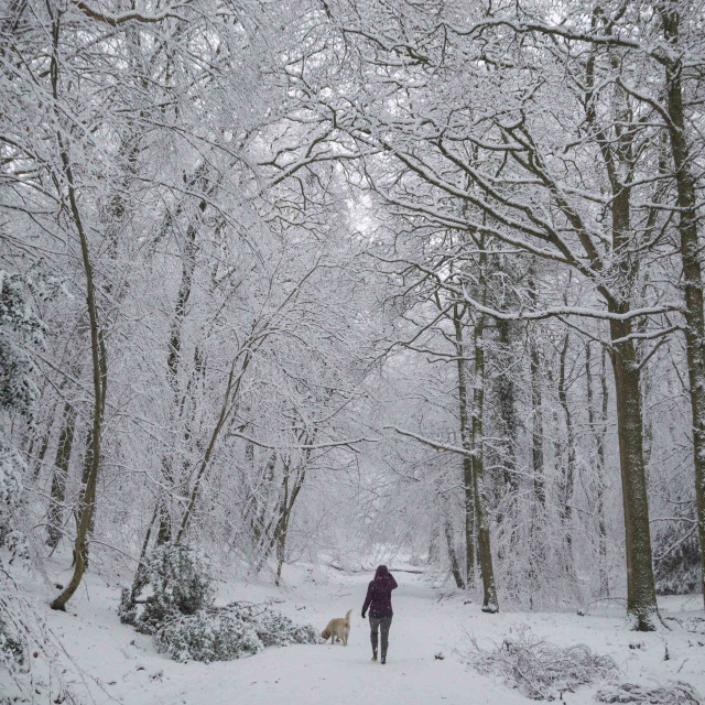 """Snowy Forest of Dean"" stock image"