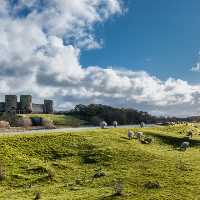 """Rhuddlan Castle with Sheep"" stock image"