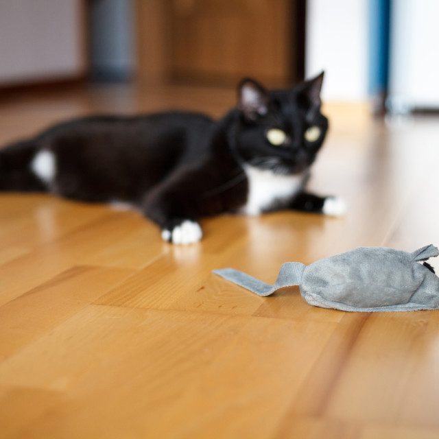 """Cat playing with mouse-toy"" stock image"