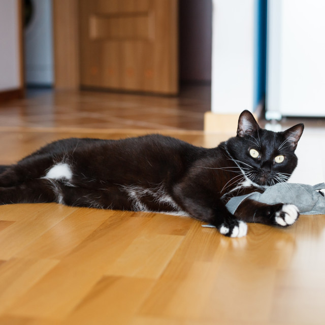"""Adorable black cat playing with mouse-toy"" stock image"