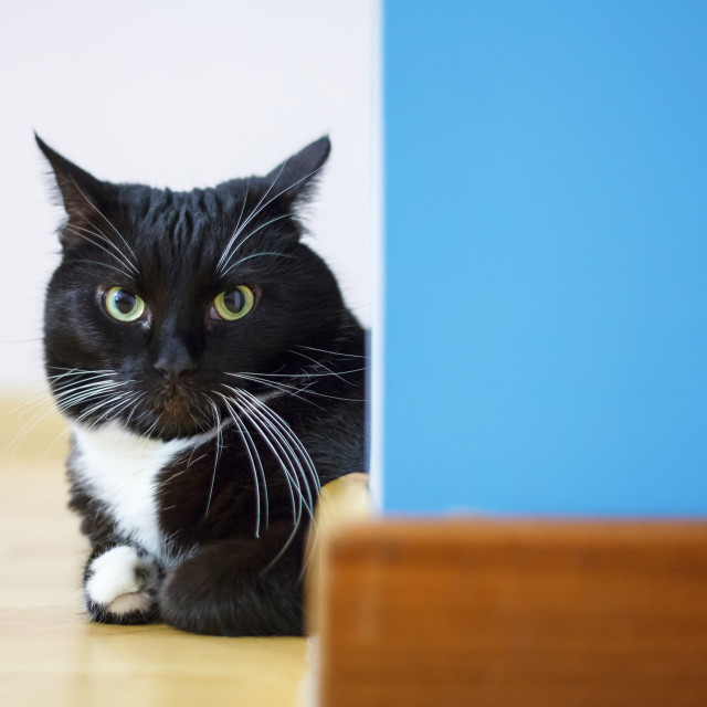"""Black cat sitting around the corner looking at camera"" stock image"