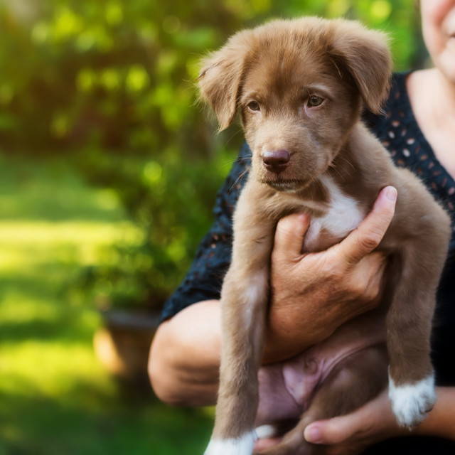 """""""owner carrying puppy in house garden"""" stock image"""