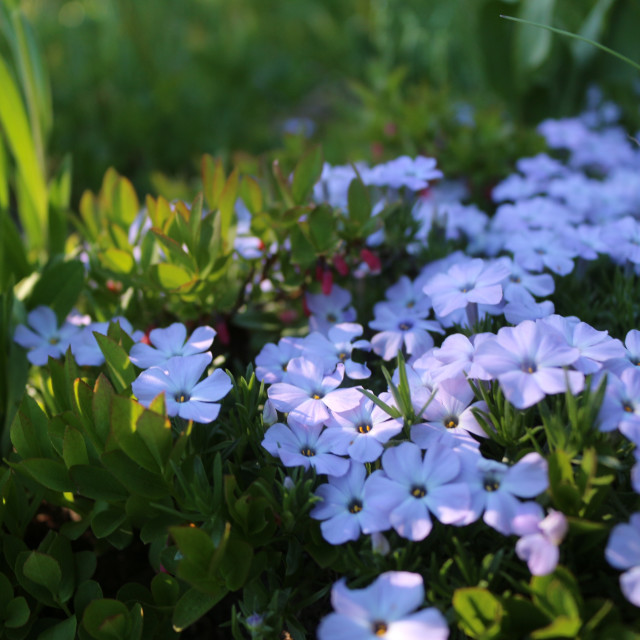 """Manning Park Spring Flowers"" stock image"