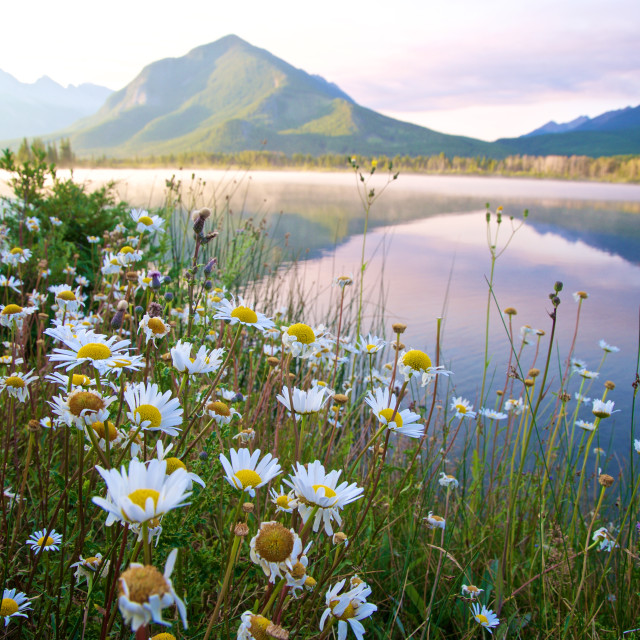 """Vermillion Lakes Banff"" stock image"