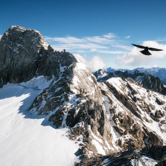 """""""Bird flies over Dachstein glacier, Austria."""" stock image"""