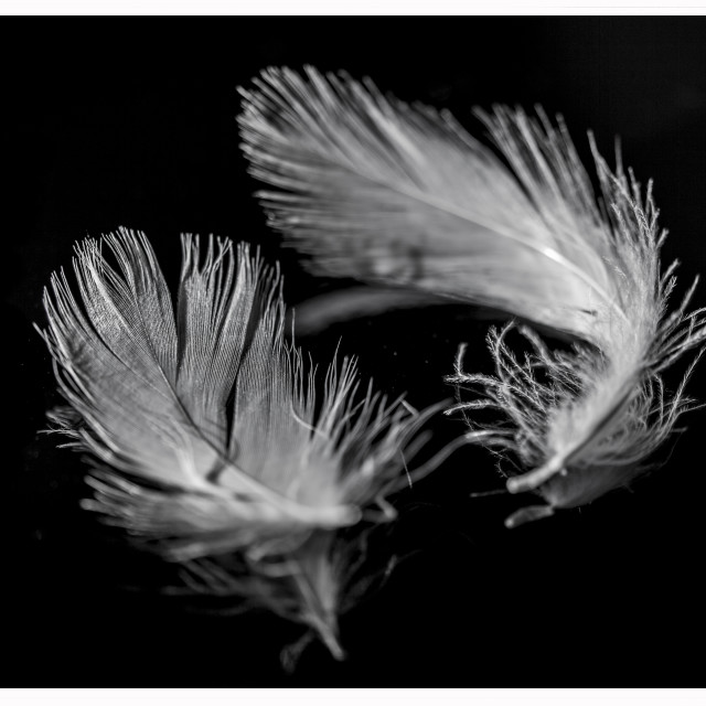 """Feathers"" stock image"
