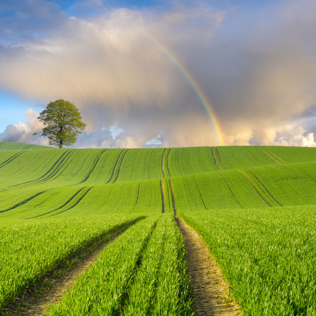 """rainbow over a green spring field"" stock image"