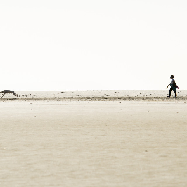"""Woman walks with Greyhound on beach"" stock image"