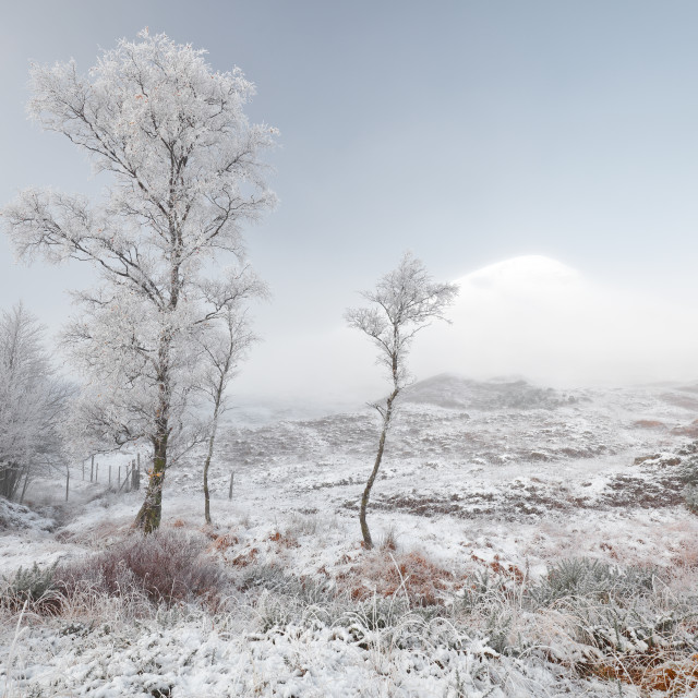 """Glen Shiel Misty Winter Trees"" stock image"