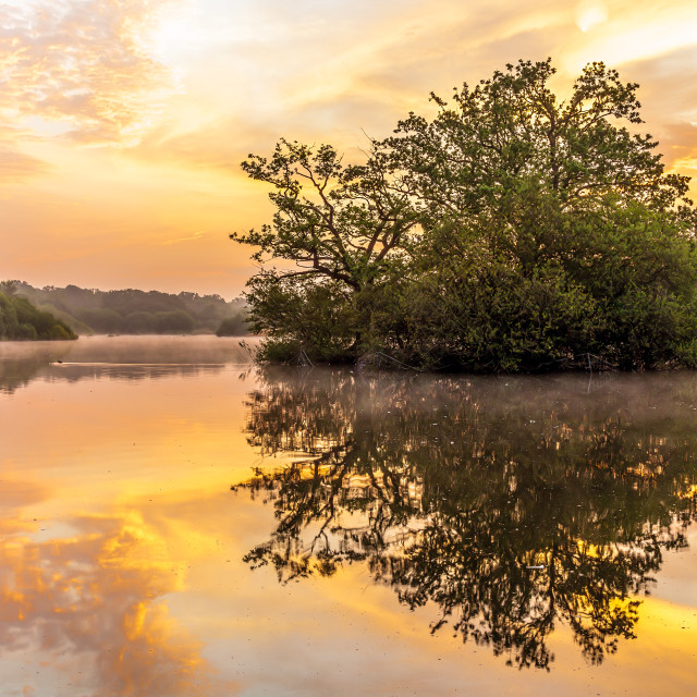 """""""Sunrise in Epping Forest"""" stock image"""