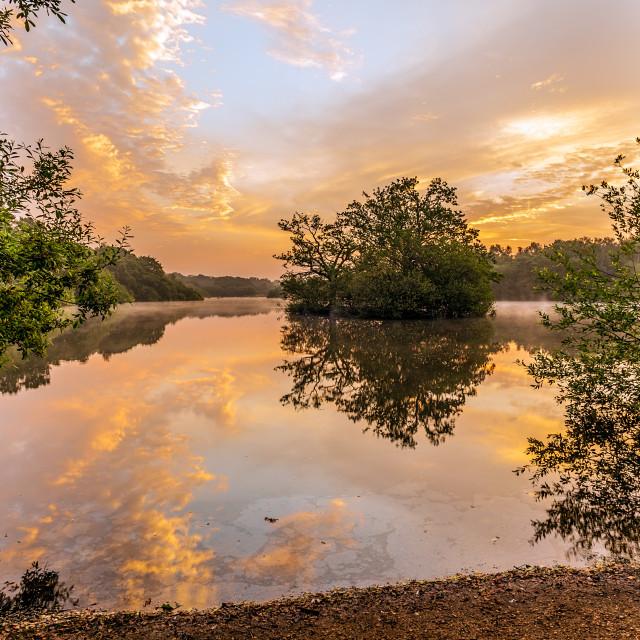 """Hollow Pond Sunrise"" stock image"