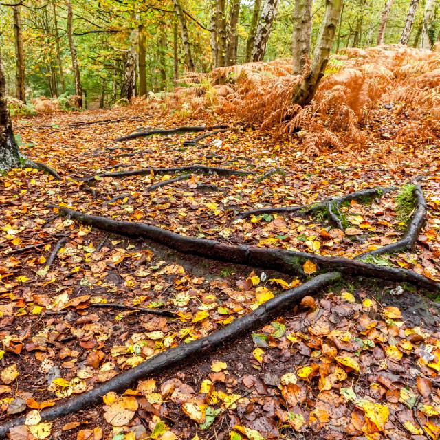 """""""Autumn on the Heath"""" stock image"""