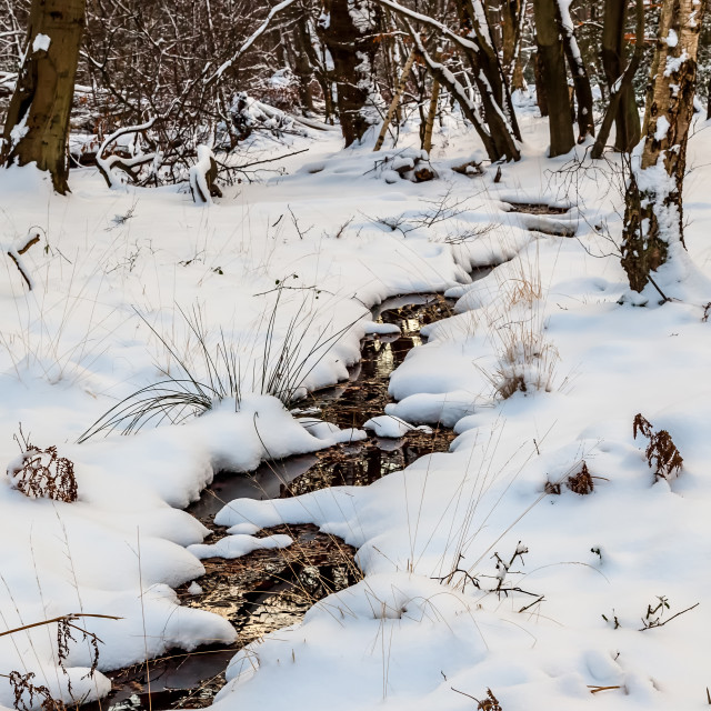 """Snow in Epping Forest"" stock image"