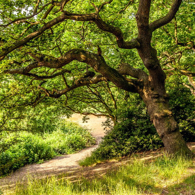 """Summer Woodland"" stock image"