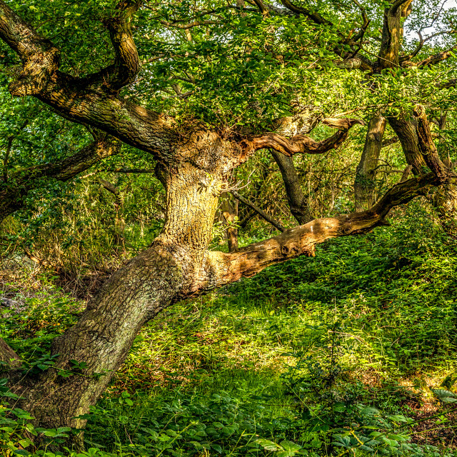 """Ancient Forest"" stock image"
