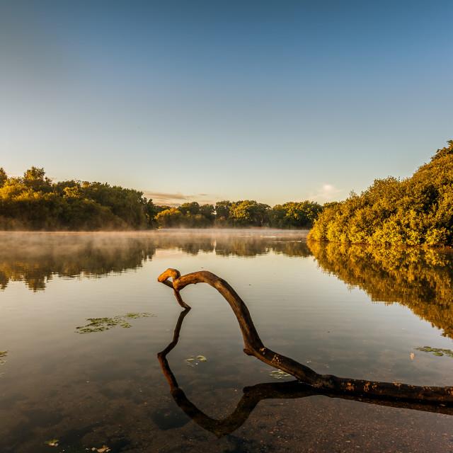 """""""Epping Forest Sunrise"""" stock image"""