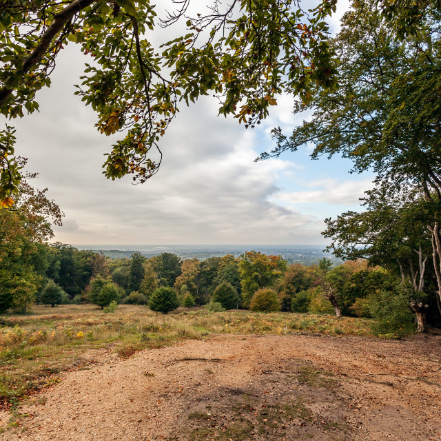 """""""Epping Forest View"""" stock image"""