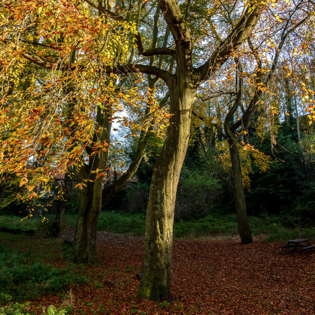 """Autumn in the Dell"" stock image"