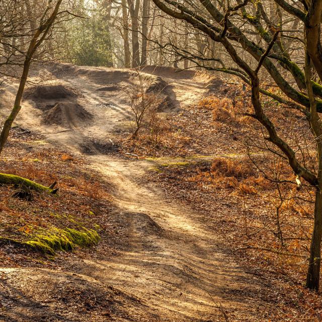 """Forest Bike Run"" stock image"