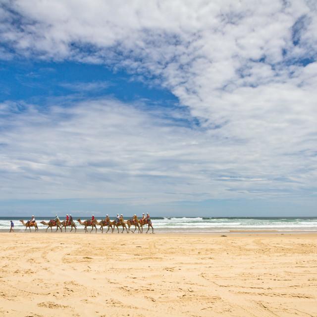 """Camel caravan on the beach"" stock image"