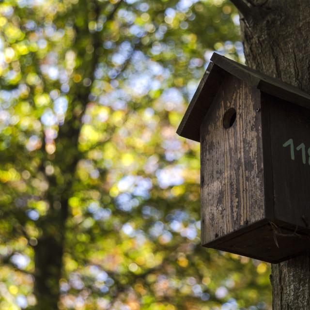 """Bird tree house"" stock image"