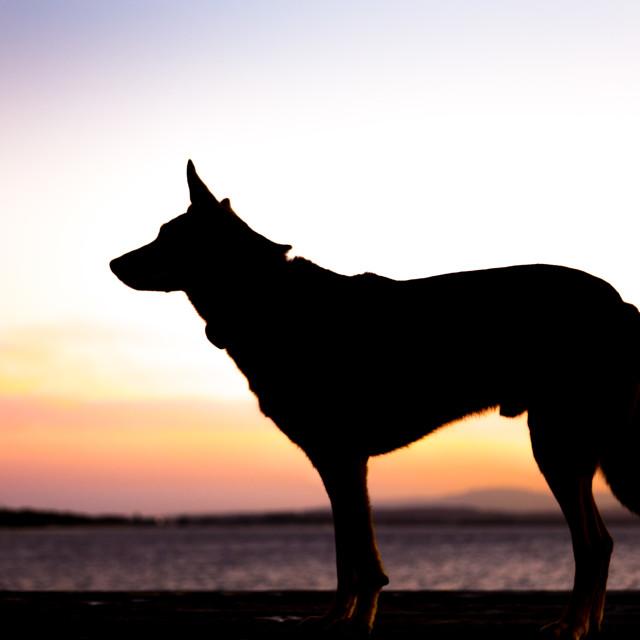 """""""Dog profile"""" stock image"""