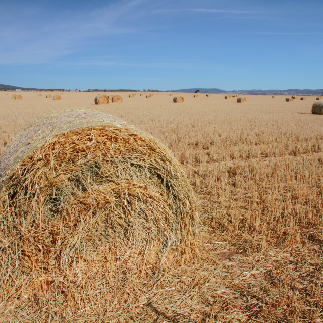"""Bale of hay"" stock image"