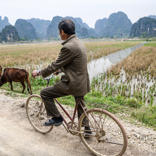 """Vietnamese man cycling through rice fields"" stock image"
