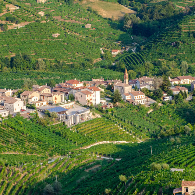 """Cartizze and Prosecco vineyards"" stock image"
