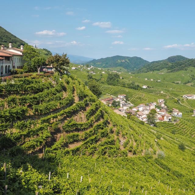 """""""Valdobbiadene town and Prosecco vineyards in Veneto"""" stock image"""