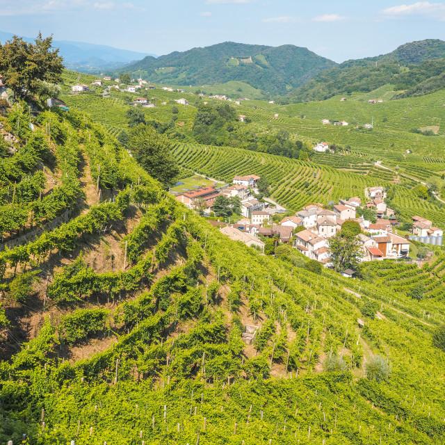 """Valdobbiadene hills and vineyards, land of Prosecco"" stock image"